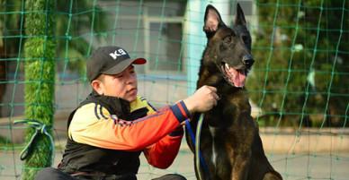Võ sư karate lập gia phả cho chó