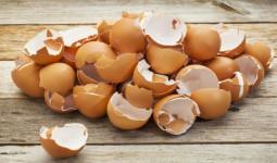 Vỏ trứng gà tưởng như vô dụng nhưng thực ra chữa được cả tá bệnh khác nhau