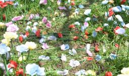 Vườn hoa tulip, hoa hồng trong Thảo Cầm Viên Sài Gòn bị du khách thản nhiên giẫm đạp
