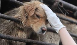Khoảnh khắc người Trung Quốc bật khóc khi lần đầu ăn thịt chó
