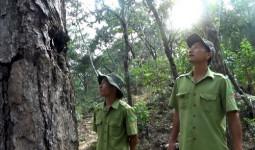 Tết của những người giữ rừng - VnExpress