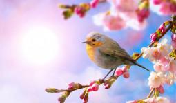 Sống thọ hơn nhờ nắm bắt phép dưỡng sinh mùa Xuân
