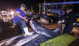 Tàu cá miền Trung trúng 10 tấn cá từ chuyến biển xuyên Tết