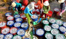 Ngư dân kiếm hơn 100 triệu đồng sau đêm đánh cá cơm đầu năm - VnExpress