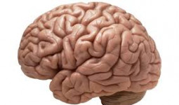 Cảnh báo di chứng não vì bổ sung không đủ sắt trong giai đoạn đầu đời