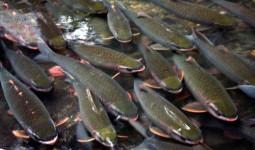 Du khách đầu năm thăm đàn cá thần ở Thanh Hóa