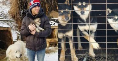 Vận động viên trượt tuyết Mỹ giải cứu 90 chú chó được nuôi lấy thịt, đóng cửa cả trang trại chó khi đang thi đấu tại Hàn Quốc