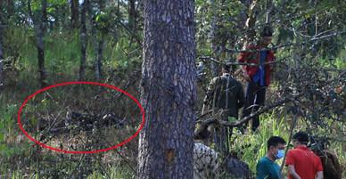 Thi thể nữ cháy đen trong rừng thông ở Đà Lạt