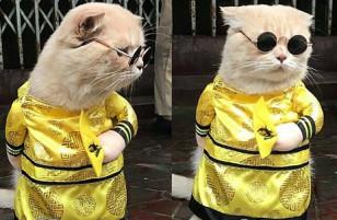 Chú mèo tên Chó ngầu nhất Việt Nam gây sốt báo quốc tế