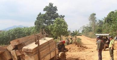 Bắt giữ 5 đối tượng vận chuyển gỗ quy mô lớn trong rừng phòng hộ