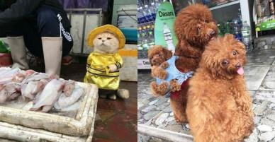 Những chú chó mèo gốc Việt dễ thương trên báo nước ngoài: Mèo trông phản thịt, chó chui tủ lạnh tránh nóng