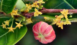 7 loại cây giải độc tại chỗ dễ tìm đã được dân gian kiểm chứng