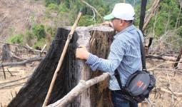 Kỷ luật nhiều cán bộ kiểm lâm liên quan vụ phá rừng phòng hộ Tiên Lãnh