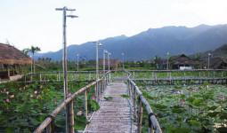 Đường vào đầm sen hoa nở bạt ngàn ở Nha Trang