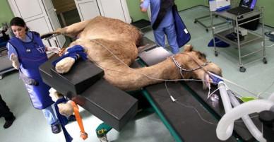 Ảnh: Nỗ lực cứu chữa động vật hoang dã trên khắp thế giới