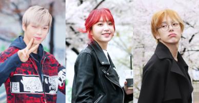 Tiên cảnh hoa anh đào tại Hàn: Mỹ nhân Hani chiếm hết spotlight, Wanna One xuất hiện cùng quân đoàn mỹ nam