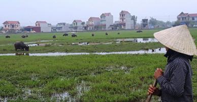 Thanh Hóa yêu cầu xã trả lại phí đồng cỏ chăn nuôi trâu bò cho dân