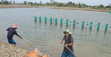 Vụ ném thuốc độc làm chết hàng triệu con tôm: Khởi tố vụ án