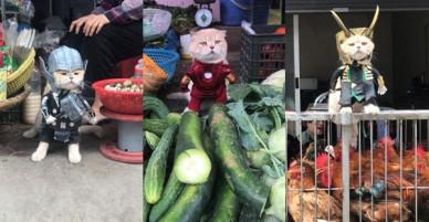 Rũ bỏ hình ảnh hoàng thượng, chú mèo tên Chó hoá thân thành anh hùng Avenger oanh tạc chợ cá Hải Phòng