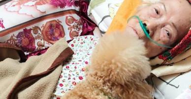 Clip cảm động: Được bà chăm từ nhỏ, bé cún biết bà ốm nặng quyết nằm cạnh không rời