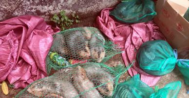 Hàng chục động vật hoang dã trên ôtô khách đưa về Sài Gòn