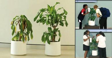 IKEA yêu cầu mọi người 'miệt thị' một cái cây trong 30 ngày, kết quả mang đến nhiều suy ngẫm