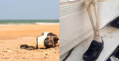 Bí ẩn 14 chân người đi giày lần lượt dạt vào bờ biển Canada