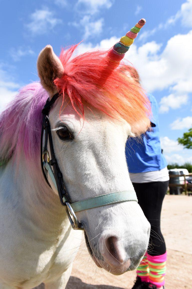 kì lân, ngựa, ngựa lùn, pony, trang điểm, tin8, Anh quốc, trẻ em