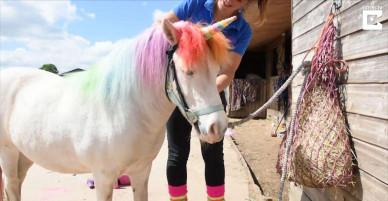 """Những """"phù thuỷ"""" biến hoá ngựa thành kỳ lần bằng phép màu"""