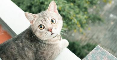 Chú mèo tên Bư nổi tiếng trên MXH bất ngờ qua đời khiến cư dân mạng tiếc nuối