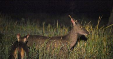 Kinh nghiệm xem thú ban đêm ở rừng Nam Cát Tiên