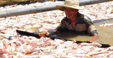 80 hộ dân trắng tay khi 1.500 tấn cá chết trên sông La Ngà - VnExpress