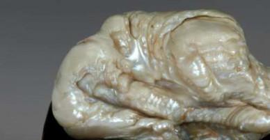 Ngọc trai 300 tuổi cực lớn hình sư tử trị giá 14 tỷ