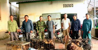 50 cảnh sát bao vây đường dây trộm chó