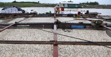 Lãnh đạo tỉnh Đồng Nai: Cá chết ở sông La Ngà do thiên tai