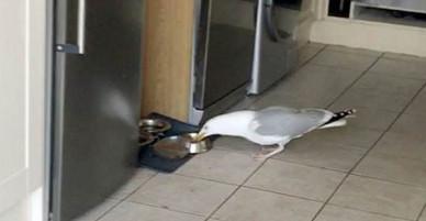 Clip chim hải âu hồn nhiên trấn lột thức ăn của 2 chú mèo làm mưa làm gió MXH quốc tế vì quá kịch tính