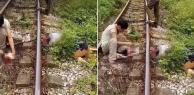 Thái Nguyên: Đi bộ qua đường sắt, người đàn ông bị tàu hoả cán đầu lìa khỏi cơ thể
