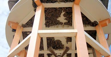 Quần thể tổ chim én trên tháp nước 100 năm ở Bà Rịa - Vũng Tàu