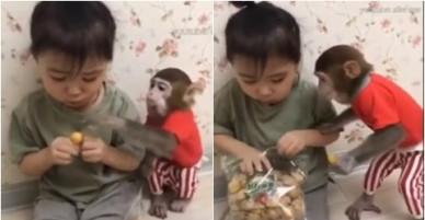 Bé gái 3 tuổi giành đồ ăn với chú khỉ mặc áo đỏ