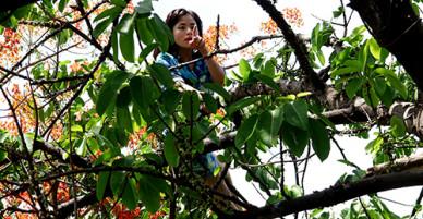 Hơn một giờ giải cứu cô gái ngáo đá la hét trên cây