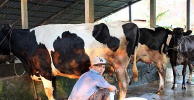 """Nông thôn mới ở TP.HCM: """"Nâng chất"""" chính quyền, kết nối nông dân"""