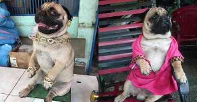 """Các bạn trẻ tạm dừng bóc giá outfit đi, vào mà xem chú """"rich dog"""" đang nổi như cồn trên MXH đây này!"""