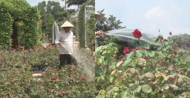 Người sở hữu 40.000 chậu hồng đẹp khiến ai cũng phải ngưỡng mộ