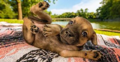 Ảnh chó đẹp nhất năm 2018: Tôn vinh bạn tốt nhất của con người qua những thước phim đầy cảm xúc