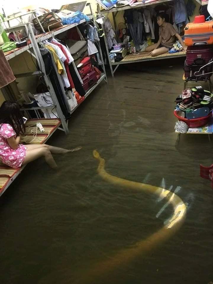 bão số 9, lũ lụt, ngập nước, chế ảnh, cư dân mạng, cười, hài hước, tin8