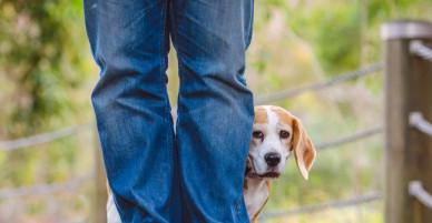 """""""Giải mã"""" những hành động kỳ lạ mà chú chó nhà bạn vẫn làm hằng ngày"""