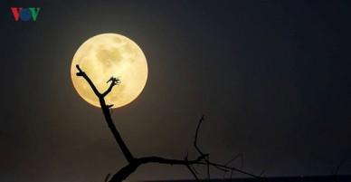 Cận cảnh siêu trăng đẹp không tưởng ở khắp các tỉnh thành Việt Nam