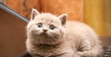 """Chùm ảnh động những chú mèo vui nhộn vừa đáng yêu vừa """"dễ ghét"""""""