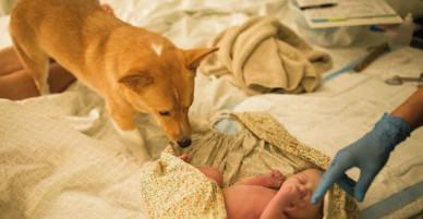 Bộ ảnh cho thấy chó là loài động vật tình cảm với con người nhất hệ mặt trời!
