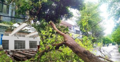 Bão số 9: Nhiều cây cổ thụ bị đổ sập, nhà trường phải di tản khẩn cấp.